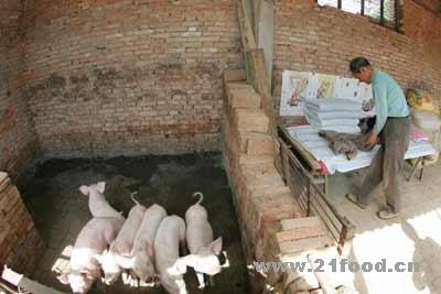 蓝田陕西数猪圈洋葱睡在猪圈防偷猪食品-百名切开的图片村民图片