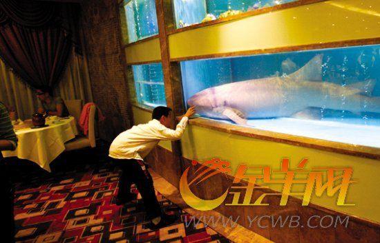 """广州一酒家""""护士鲨""""成功获救"""